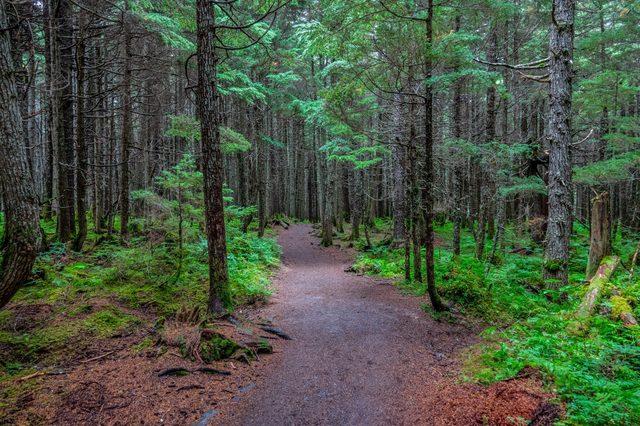 Winner creek trail under the trees, Alaska