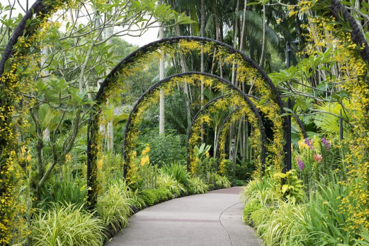 scenic artificial arcs with many yellow orchid flowers in famous Singapore Botanical Garden