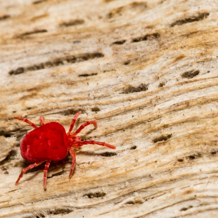 How to Get Rid of Chiggers