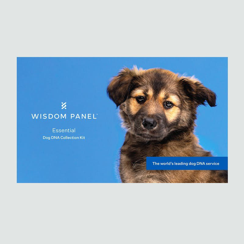 Wisdom Panel Essential Dog DNA Test