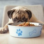 8 Signs Your Dog Could Have Dementia