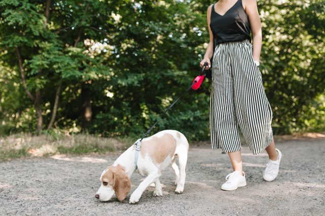 Woman in vintage striped pants walking in park while her pet is following the trail. Cute beagle dog sniffs something on the path in morning.