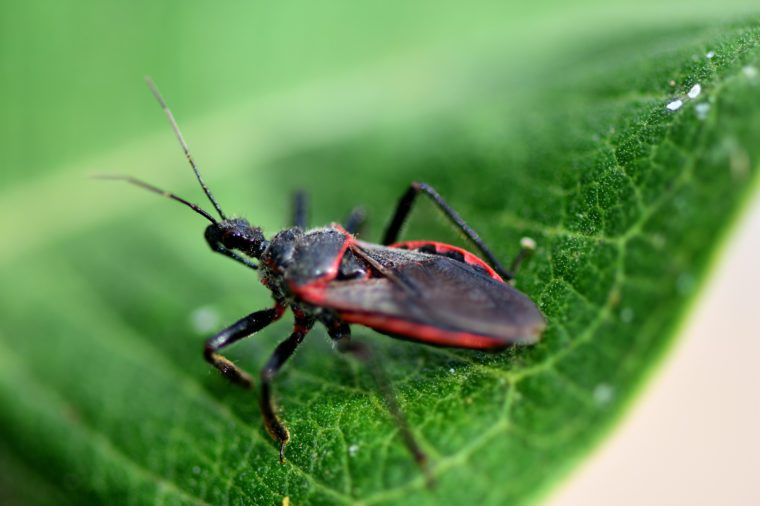 The Most Dangerous Bugs to Watch Out for This Summer