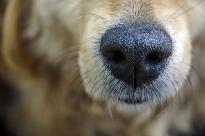 Dog. Nose. Close-up.