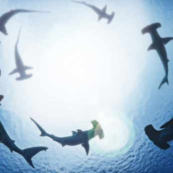 Why We Need Sharks in Our Oceans