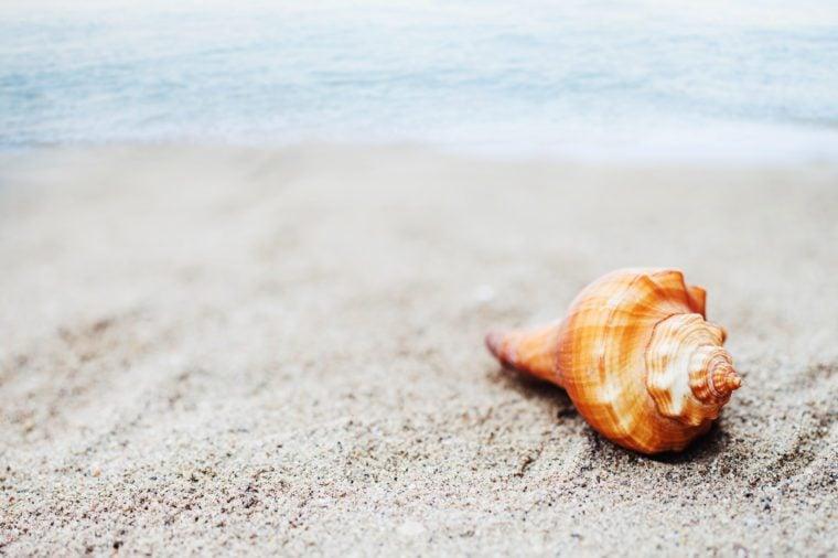 Sea shell on beach over seascape background