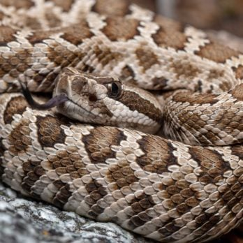 This Man's Rattlesnake Bite Is a Warning to Everyone to Take Animal Bites More Seriously