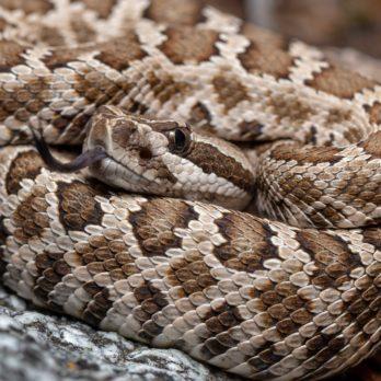This Man's Rattlesnake Bite Is a Warning to Everyone to Take Animal Bites More Seriously