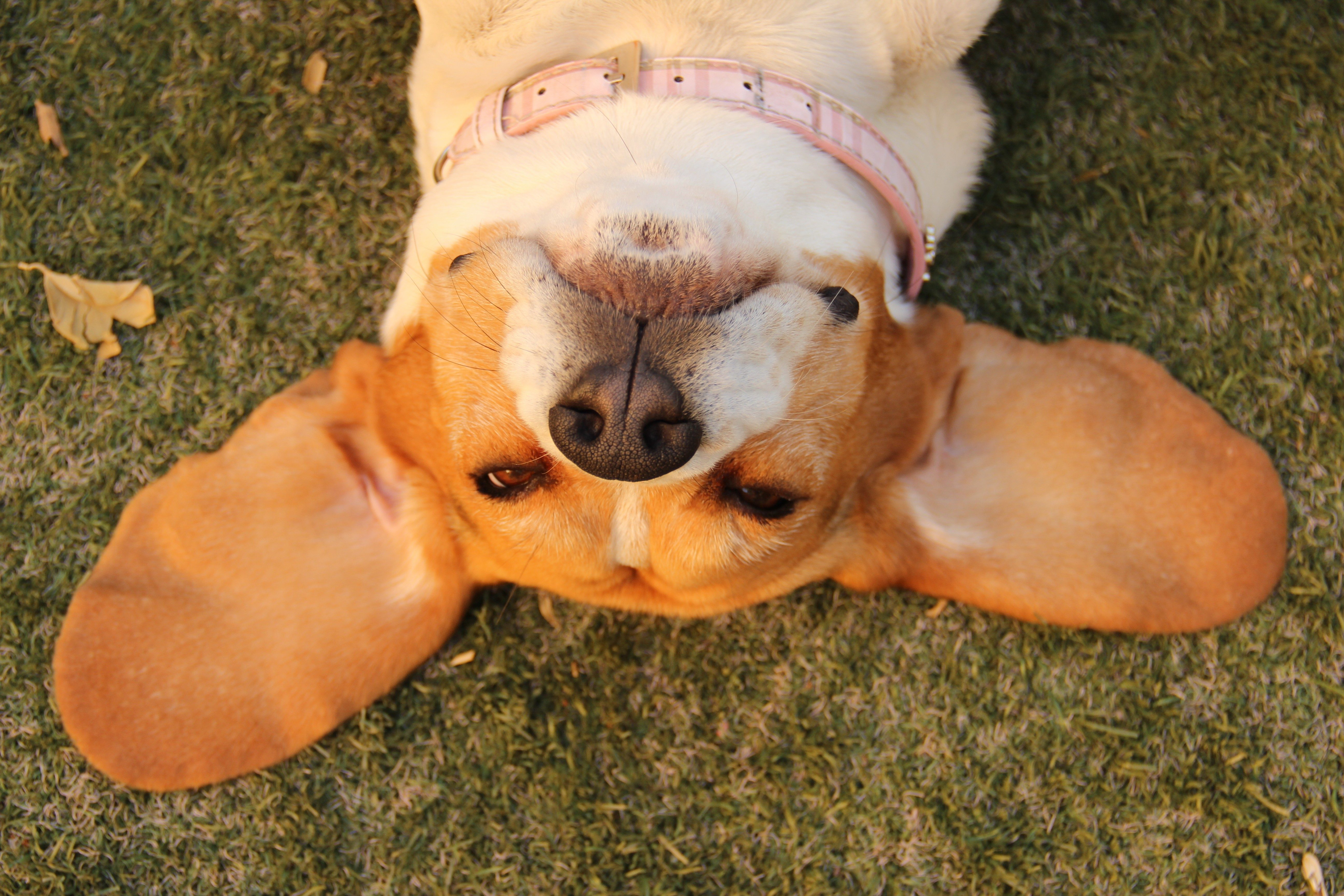 Signs Your Dog Could Have an Ear Infection | Reader's Digest