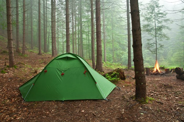 tent in the mist forest