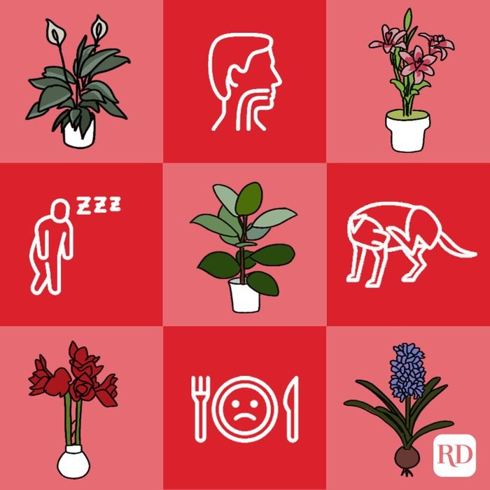 Toxic plants and symptoms of toxic plant ingestion symptoms alternating on red checkered background