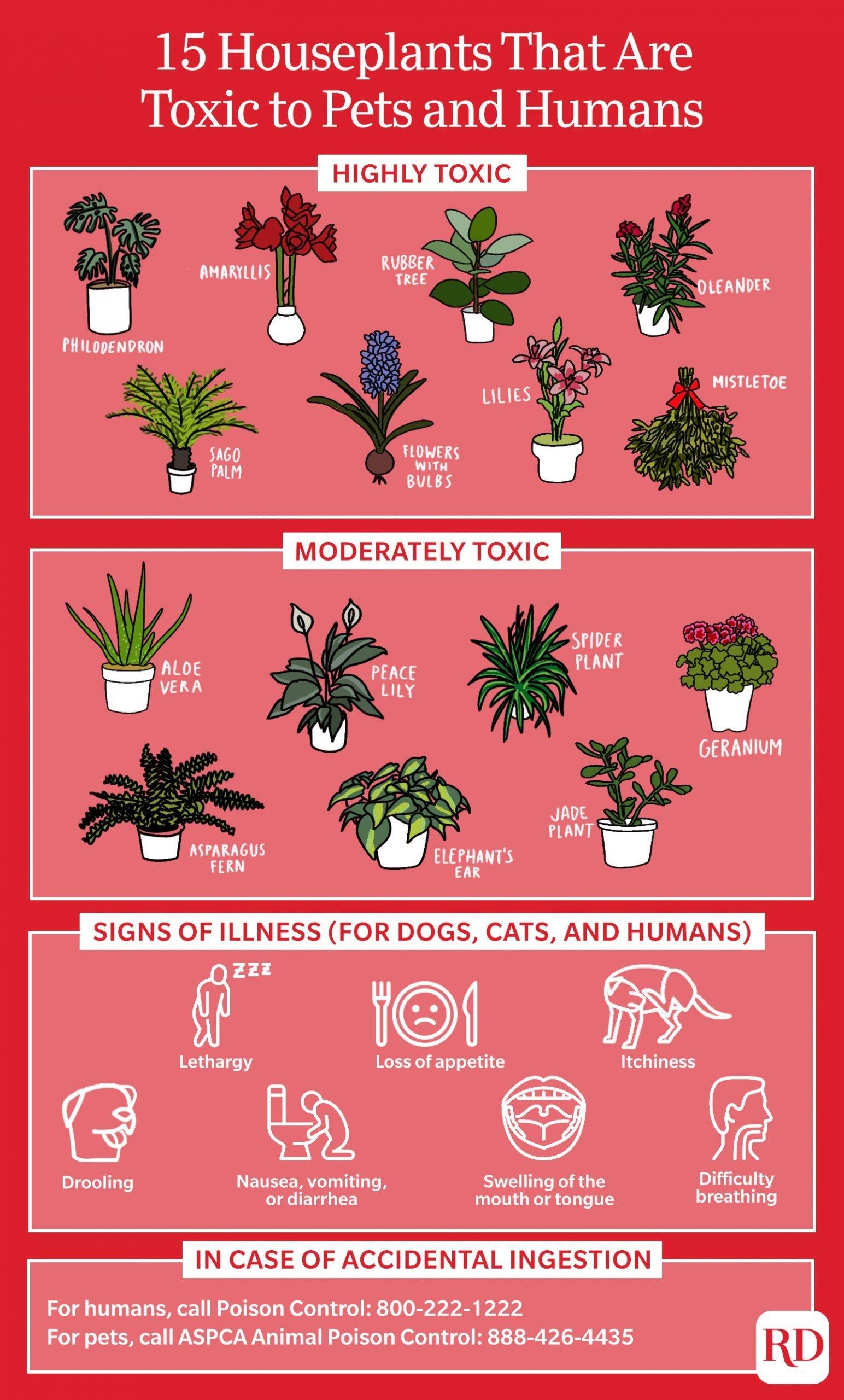 Toxic Plants infographic