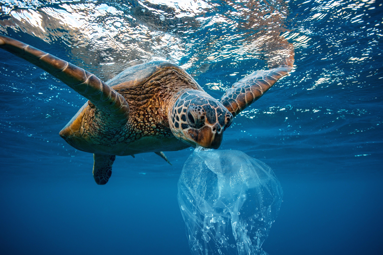 Water Environmental Pollution Problem Underwater animal Sea turtle eating Plastic