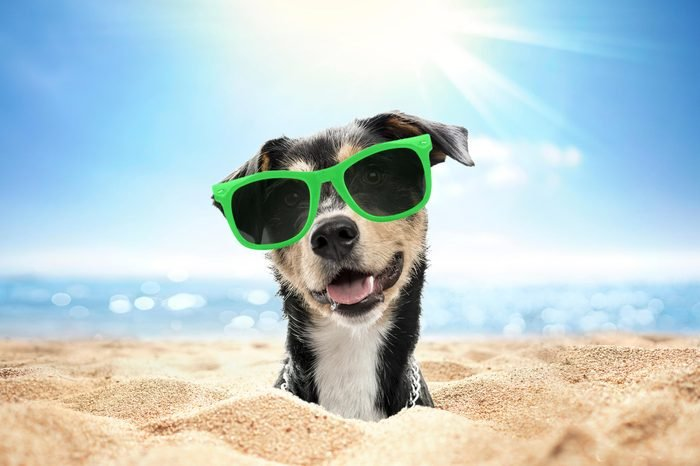 01_The-dog-days-of-summer