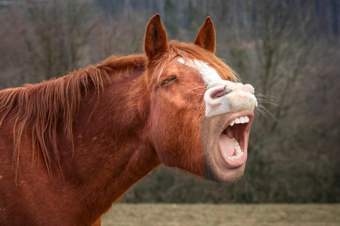 02_Straight-from-the-horse's-mouth