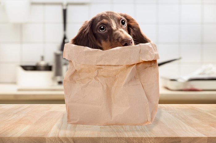 04_Doggie-bag