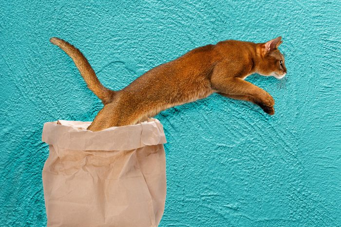 09_Let-the-cat-out-of-the-bag