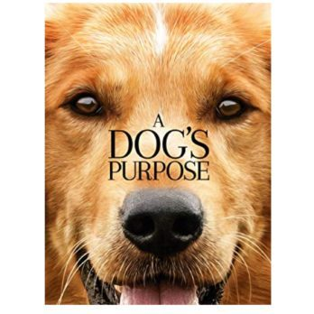 14 of the Best Dog Movies to Watch with Your Pooch