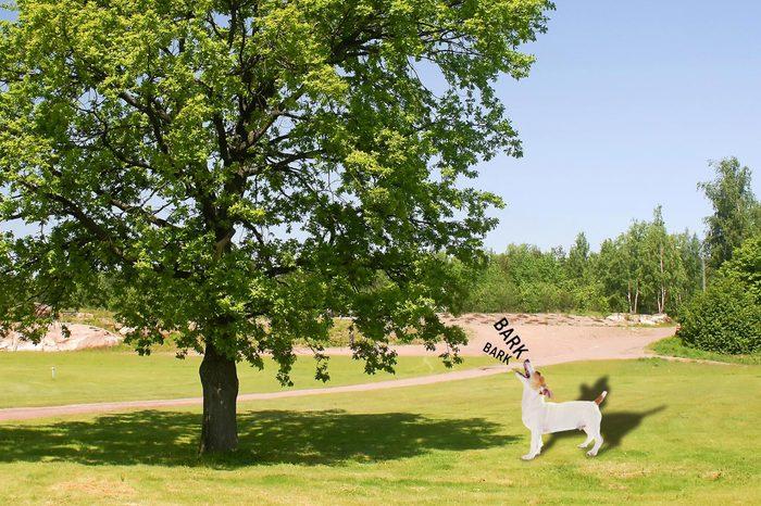 10_Barking-up-the-wrong-tree