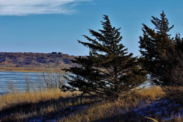 A shot of Wilson Reservoir with evergreen tree's,frozen water,brown grass, and blue sky that's bright and colorful. That's 5 Miles south of Lucas Kansas USA.