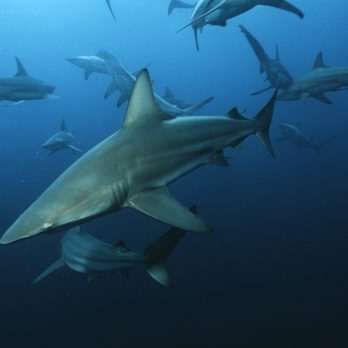 The Most Shark-Infested Waters in the World