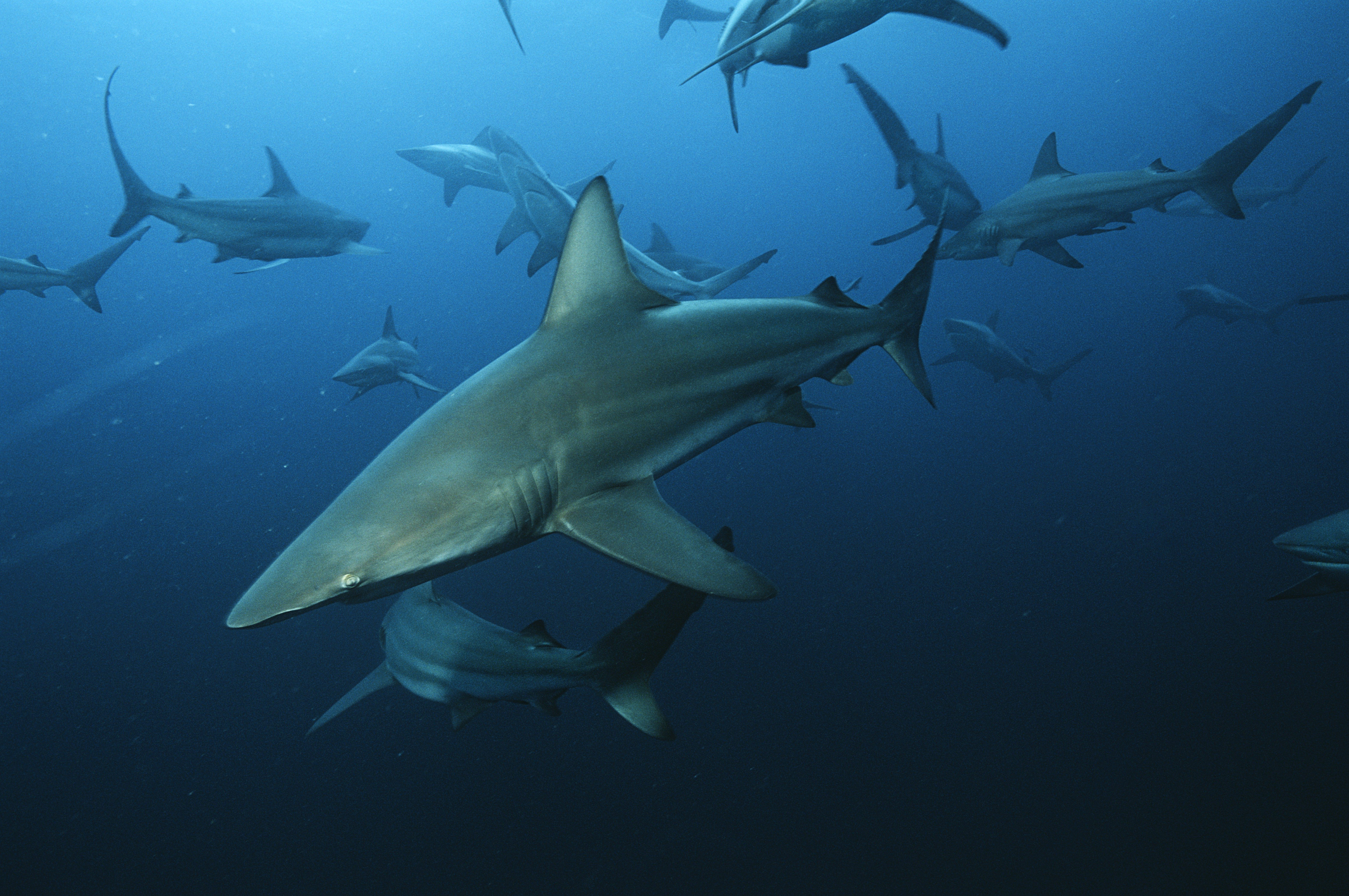 The Most Shark-Infested Waters in the World | Reader's Digest