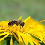 Why the World Needs Honeybees