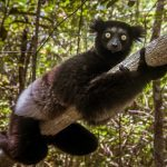 9 Animals You'll Never See at a Zoo