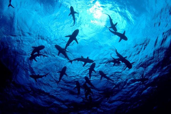 Ocean sharks