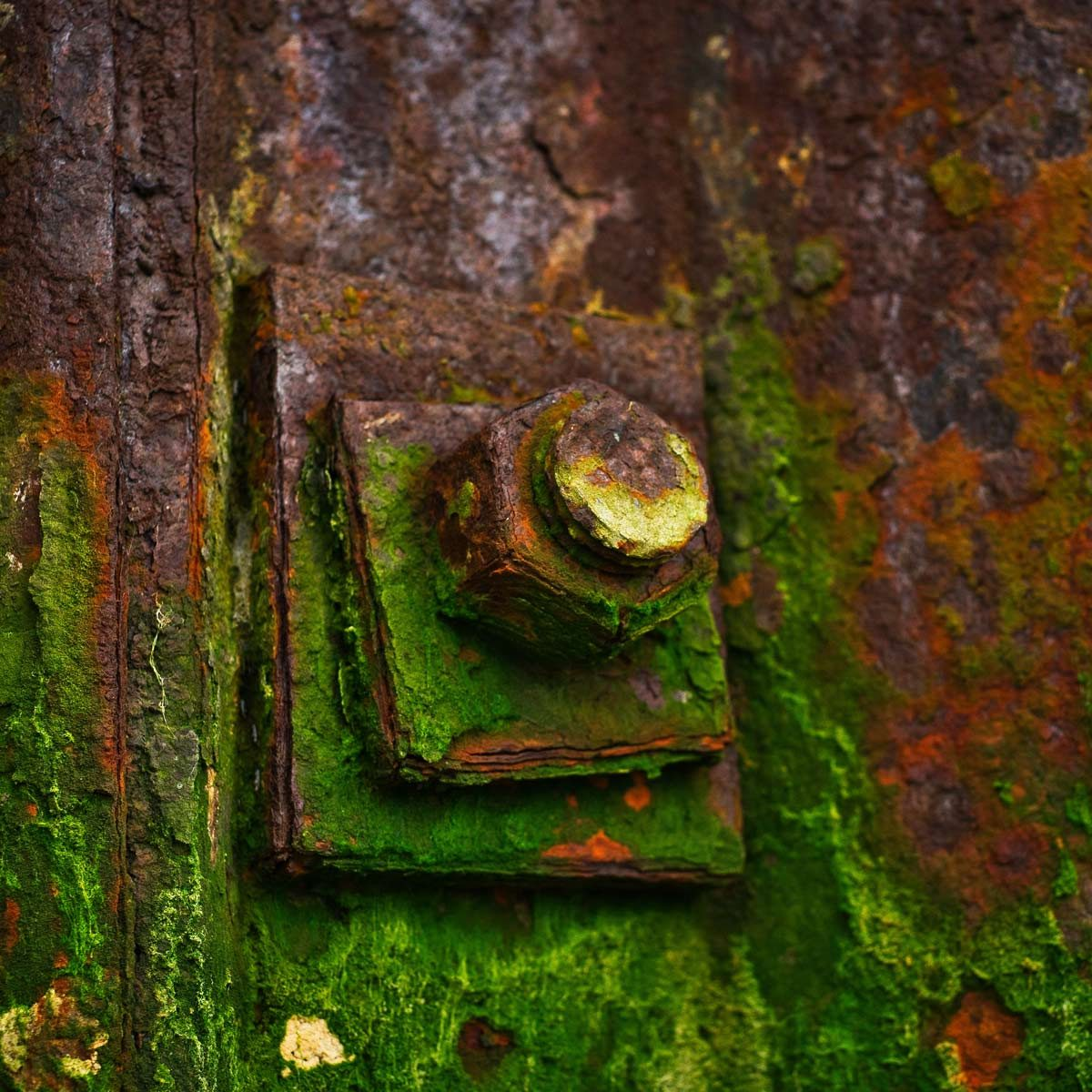 Rusted-bolt-covered-in-moss