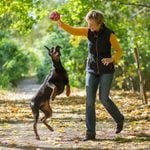 14 Rude Habits Dog Owners Need to Stop ASAP