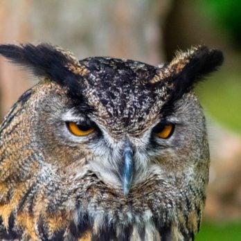 9 Reasons You Shouldn't Keep an Owl as a Pet