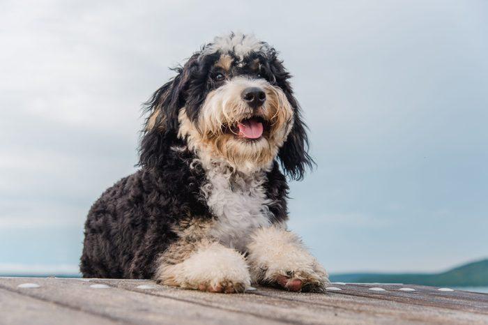 Dog on the lake