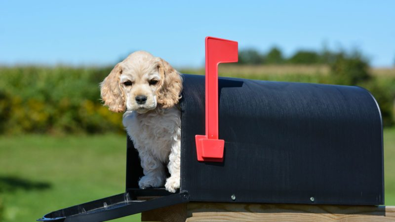 The Real Reason Dogs Seem to Hate Mailmen