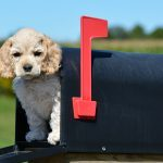 Why Do Dogs Seem to Hate the Mailman?