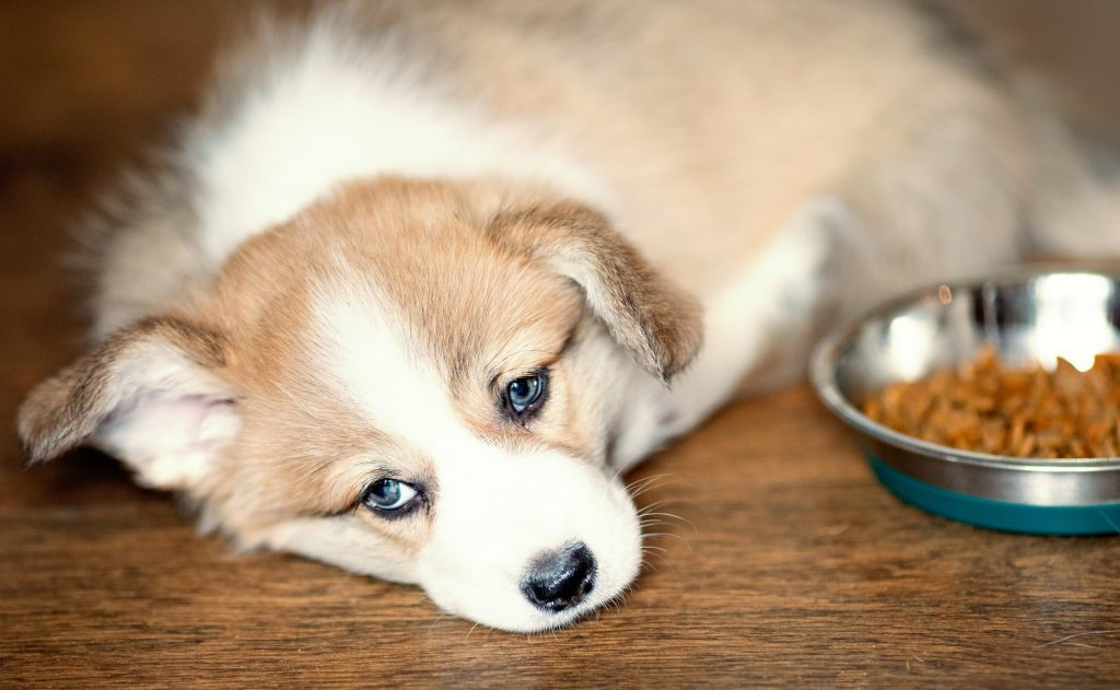 10 Possible Reasons Your Dog Isn't Eating
