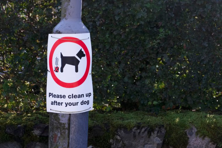 Please clean up after your dog sign on lamp post
