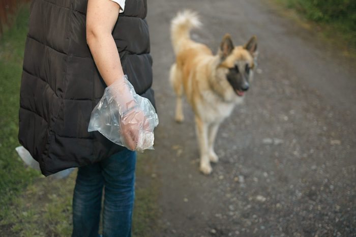 Woman with a plastic bag waiting to clean up after her dog poo, outside cropped shot