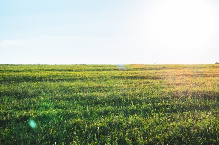 Background photography of bright sunny lush grass field under blue sunny sky. Outdoor countryside meadow nature. Rural pasture landscape of plain grass background. Agricultural grass field pastures