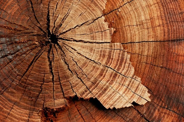 stump of tree felled - section of the trunk with annual rings