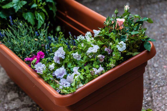 a big plastic planter full of little flower