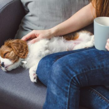 How to Tell If Your Dog Has a Fever