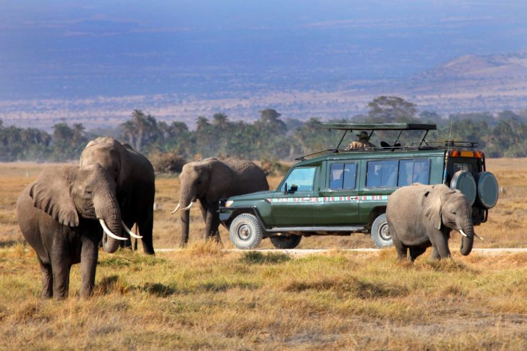 safari game drive with the elephants, masai mara reserve in kenya, Africa