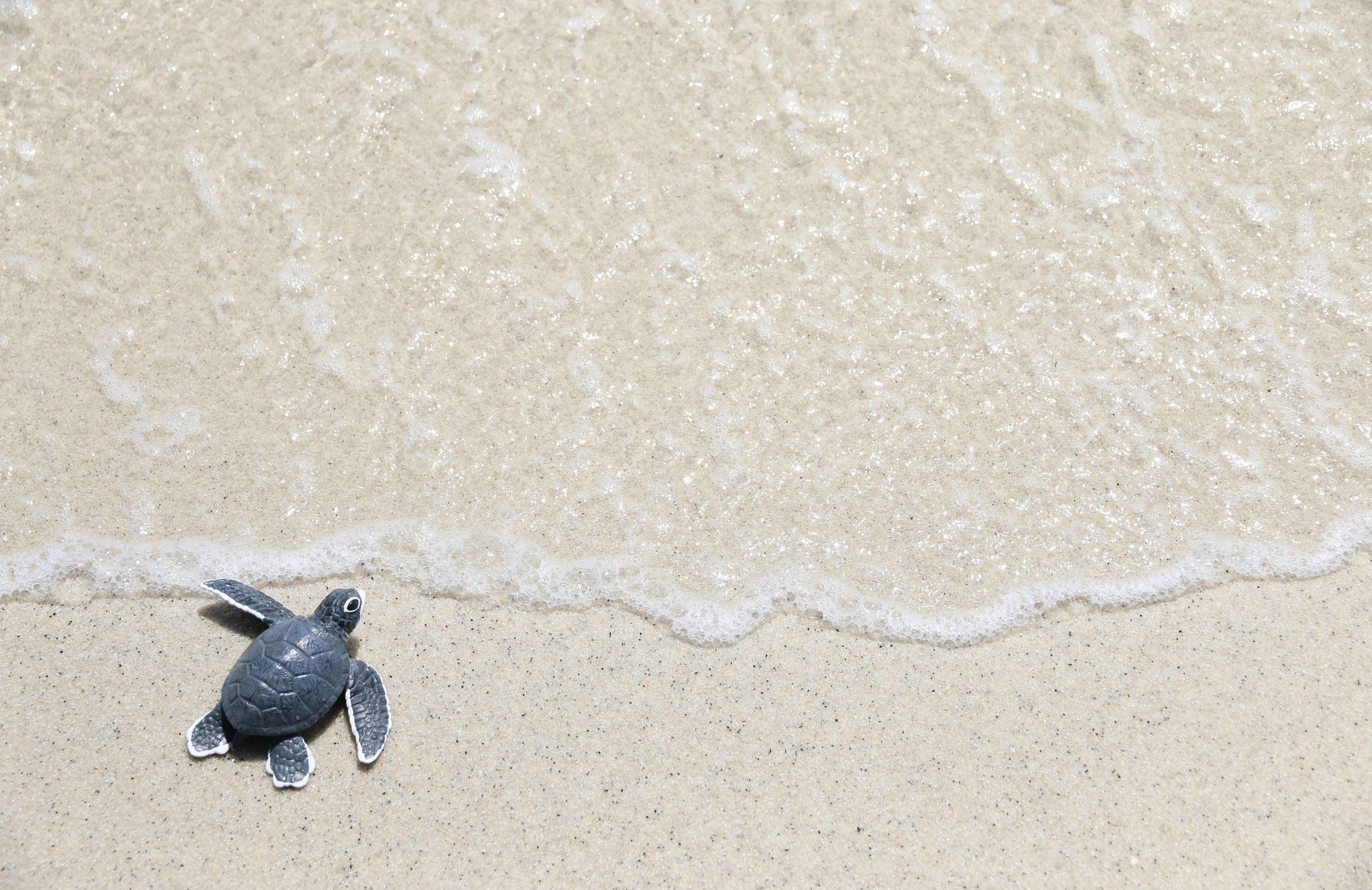 turtle baby On the beach Top view Copy space
