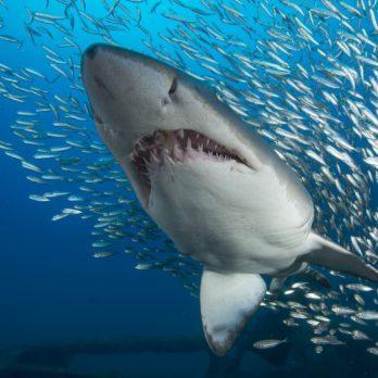 9 of the Weirdest, Wildest Sharks in the World