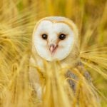 10 Things You Never Knew About Owls