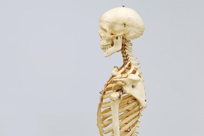 biology skeleton