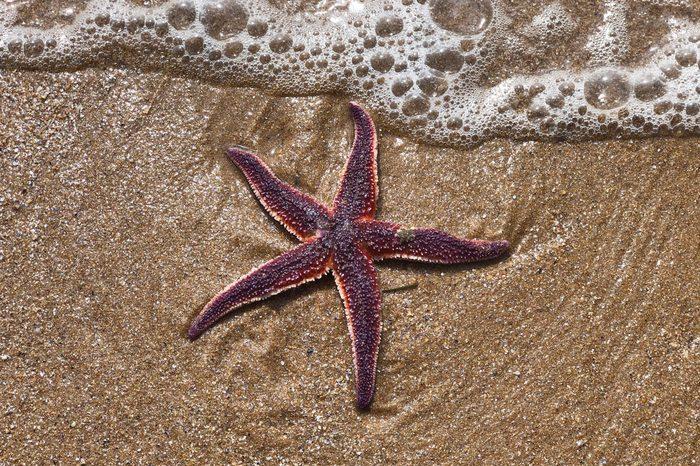 starfish sand ocean