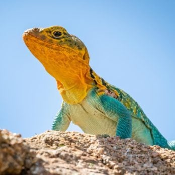 10 Reasons Lizards Are Misunderstood and Why We Need Them