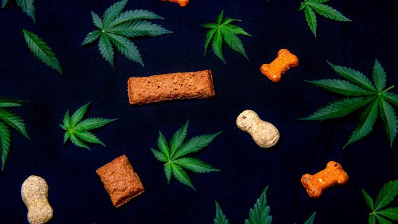 dog treats cannabis CBD